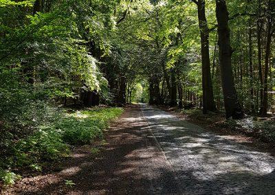 Wald im Sommer mit Weg